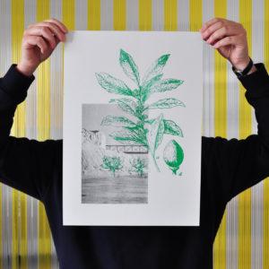 Mediterranei / poster_Alloro