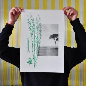 Mediterranei / poster_Ginestra